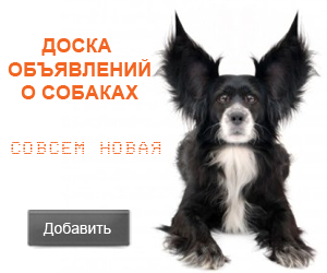 Новая доска объявлений о собаках