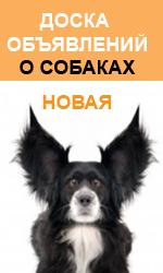 """Новая доска объявлений о собаках """""""